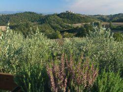 Umbrië / Zuid / Pozzo (Monte)