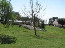 Puglia / Centraal / Ulivi (delle Querce)