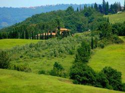 Toscane / Siena / Iris (S. Margherita)