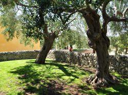Sicilië / Zuid-Oost / Melograno (Borgo Ulivi)