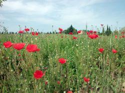 Abruzzo / Centraal / Agriturismo Le Magnolie