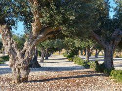 Sicilië / West / Villa Favignana