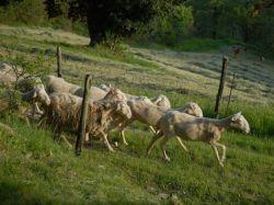 De Marken / Noord / Bioagriturismo Chignoni