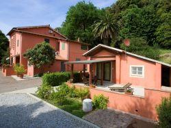 Toscane / Toscaanse kust / Mimosa (Rossa)