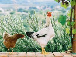 Calabrië / Noord / Agriturismo Le Farnie
