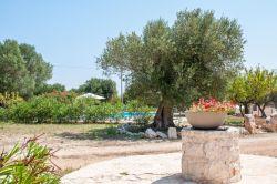 Puglia / Centraal / Trullo Acquario