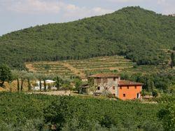 Toscane / Arezzo / Il Vigneto (La Pieve)