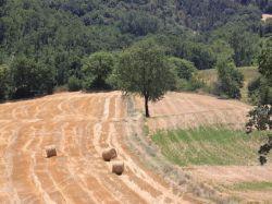 Umbrië / Zuid / Mangiatoia (Monte)