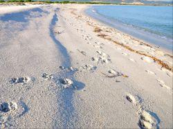 Sardinië / Noord-Oost / Mare e Pineta 3ka