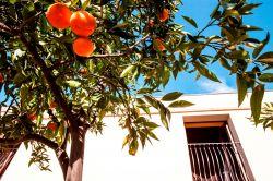 Sicilië / Oost / Agriturismo Edone