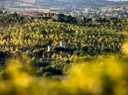 Umbrië / Zuid / Cantina (Angelini)