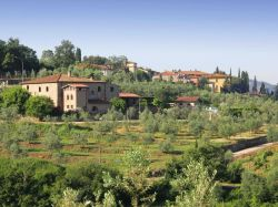 Toscane / Arezzo / Ciclamino (La Pieve)