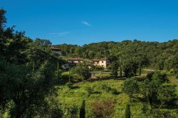 Toscane / Toscaanse kust / Sughera di Sotto (Croce)