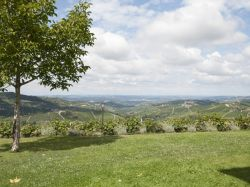Piemonte / Le Langhe / Agriturismo Torricella