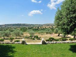 Sicilië / Zuid-Oost / Uva (Borgo Ulivi)