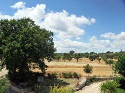 Puglia / Centraal / Masseria Selvaggi